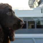 Superyacht-Veterinary-Service