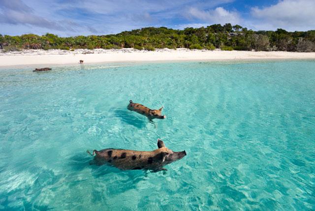Destination Guide Hidden Bahamas Megayacht News