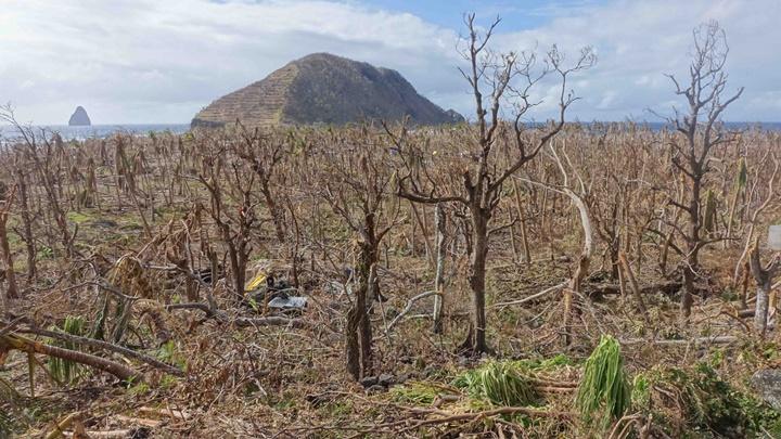 Vanuatu trees stripped bare