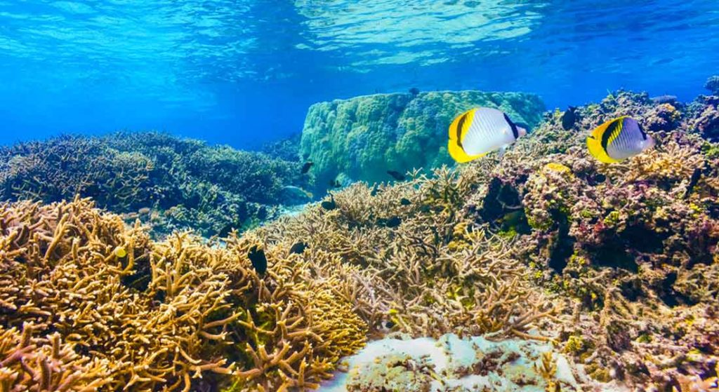 Your Kids Can Help NASA Map the World's Corals regardless of being aboard a megayacht