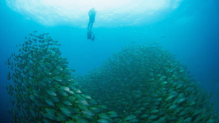 Costa Rica cruising and charter itineraries for megayachts should include free diving at Bat Islands