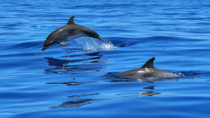 the Water Revolution Foundation is crowdfunding for Important Marine Mammal Areas